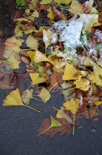 初雪の合浦公園_c0299631_23515454.jpg
