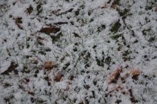 初雪の合浦公園_c0299631_23525531.jpg