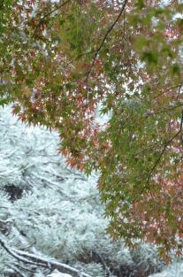 初雪の合浦公園_c0299631_23533085.jpg