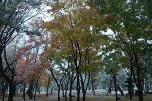 初雪の合浦公園_c0299631_2353881.jpg