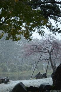 初雪の合浦公園_c0299631_23554418.jpg