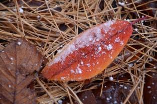 初雪の合浦公園_c0299631_23562791.jpg