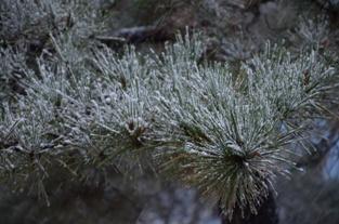 初雪の合浦公園_c0299631_2356586.jpg