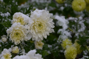 初雪の合浦公園_c0299631_23571556.jpg