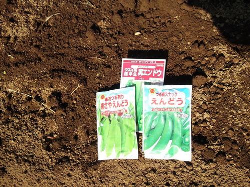 三種の豆の種まきしました。_b0137932_2052221.jpg