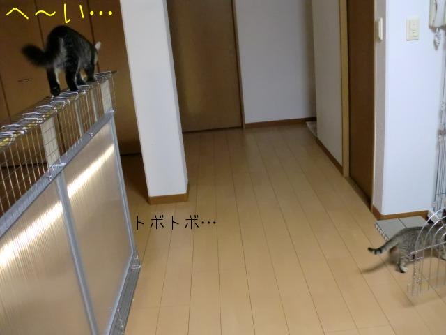 c0259945_20235351.jpg