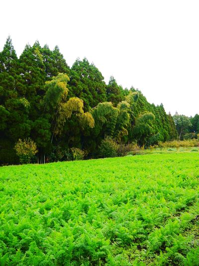 菊池水源里山ニンジン 無農薬・無化学肥料で大事に育てました!!_a0254656_1711493.jpg