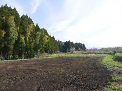 菊池水源里山ニンジン 無農薬・無化学肥料で大事に育てました!!_a0254656_17245637.jpg
