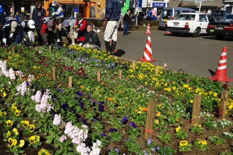 小平駅南口広場の花植え替え_f0059673_23362946.jpg