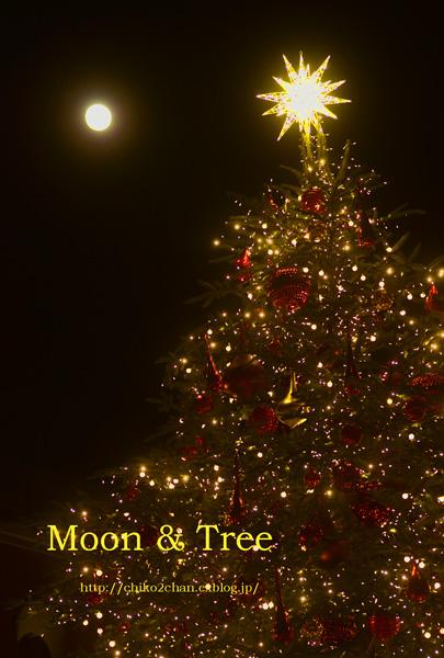 月とクリスマスツリー☆_e0221779_2335459.jpg