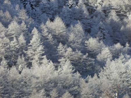 雪景色の朝_e0120896_07042961.jpg