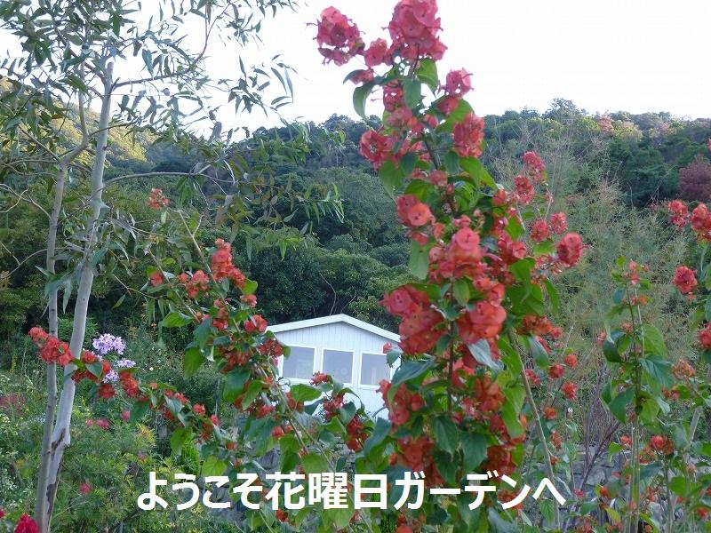 d0172010_19394162.jpg