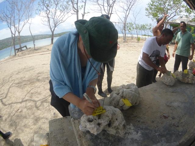 珊瑚の移植をして来ました_c0211615_7381042.jpg