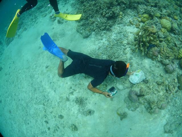 珊瑚の移植をして来ました_c0211615_7421462.jpg