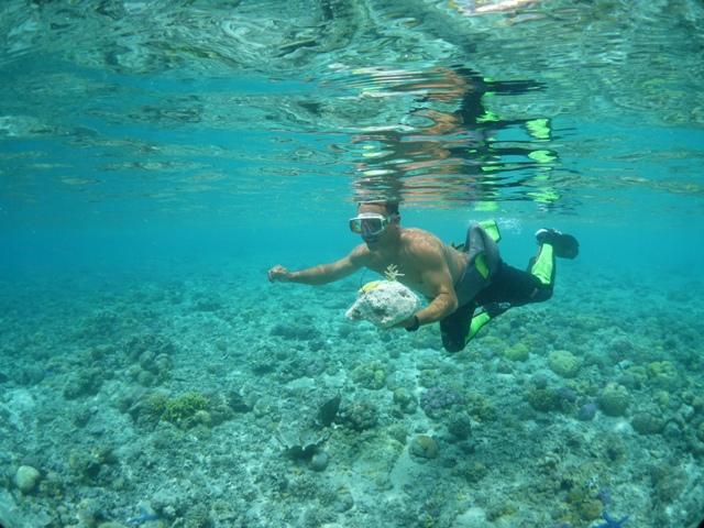 珊瑚の移植をして来ました_c0211615_742506.jpg
