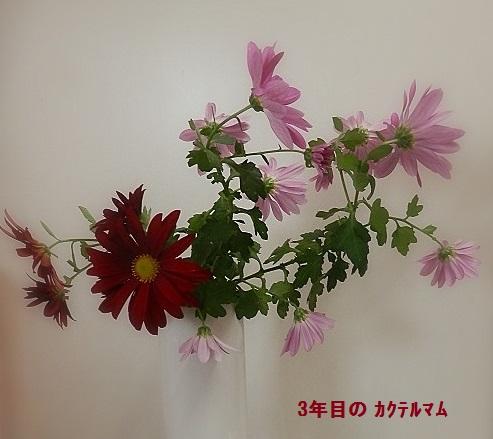 b0226221_16114910.jpg