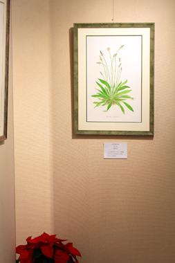 ボタニカルアート展へ_a0275527_21253115.jpg