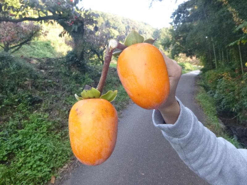 秋の奈良へ_c0113733_2202193.jpg