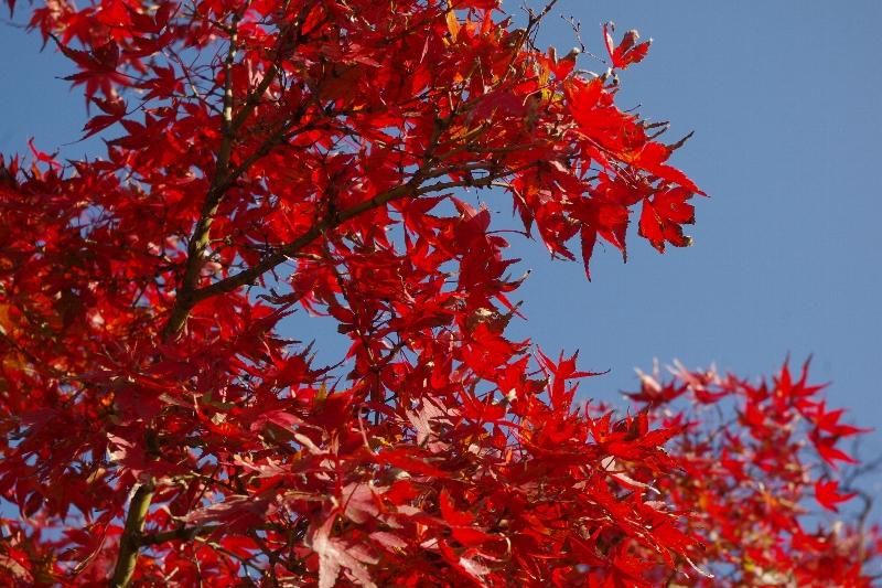秋の奈良へ_c0113733_22181013.jpg
