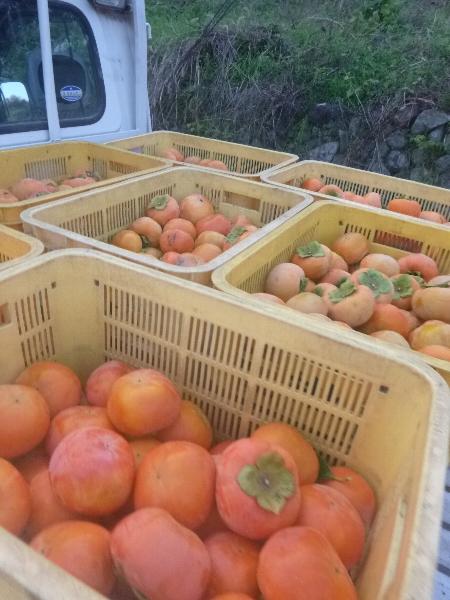 秋の奈良へ_c0113733_2264823.jpg