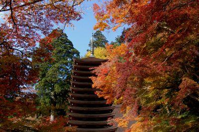 談山神社の紅葉_a0237937_23495318.jpg
