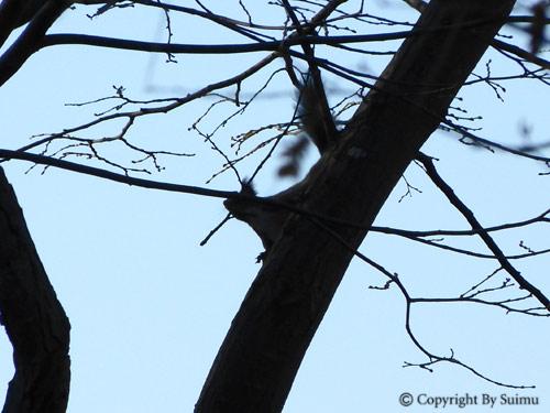 新米エゾリスの冬支度_d0154140_2185374.jpg