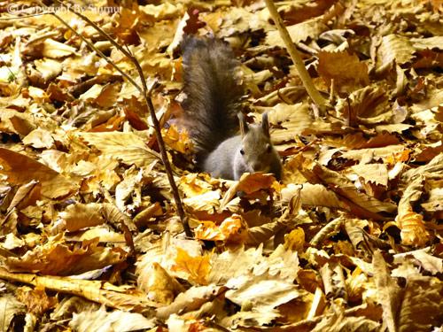 ドサンコの森も秋の気配_d0154140_22005021.jpg