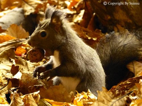 ドサンコの森も秋の気配_d0154140_22035919.jpg