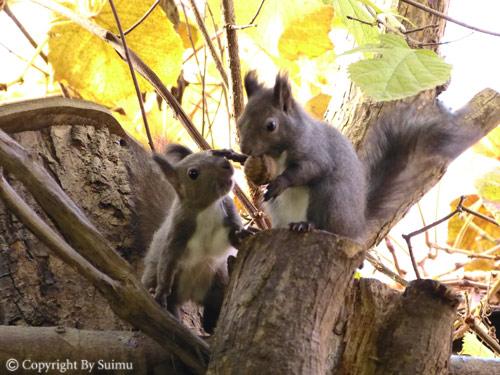 ドサンコの森も秋の気配_d0154140_22052490.jpg