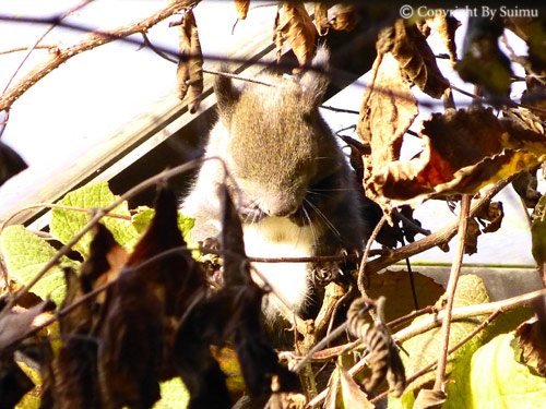 ドサンコの森も秋の気配_d0154140_22072172.jpg