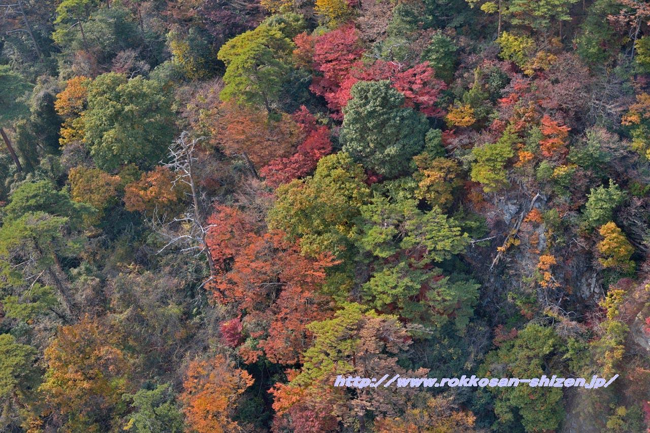 ロープウェイから眺めた六甲山の紅葉_c0129047_21402677.jpg