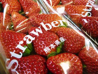 紅ほっぺ 熊本産高級イチゴ『紅ほっぺ』の初出荷は11月26日に決定!!_a0254656_14113350.jpg
