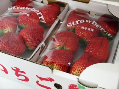 紅ほっぺ 熊本産高級イチゴ『紅ほっぺ』の初出荷は11月26日に決定!!_a0254656_1442259.jpg