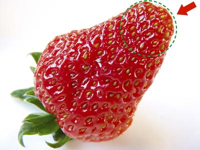 紅ほっぺ 熊本産高級イチゴ『紅ほっぺ』の初出荷は11月26日に決定!!_a0254656_14505521.jpg
