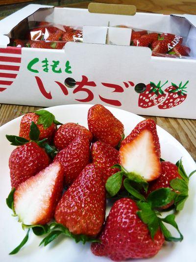 紅ほっぺ 熊本産高級イチゴ『紅ほっぺ』の初出荷は11月26日に決定!!_a0254656_145498.jpg