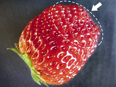 紅ほっぺ 熊本産高級イチゴ『紅ほっぺ』の初出荷は11月26日に決定!!_a0254656_14554659.jpg