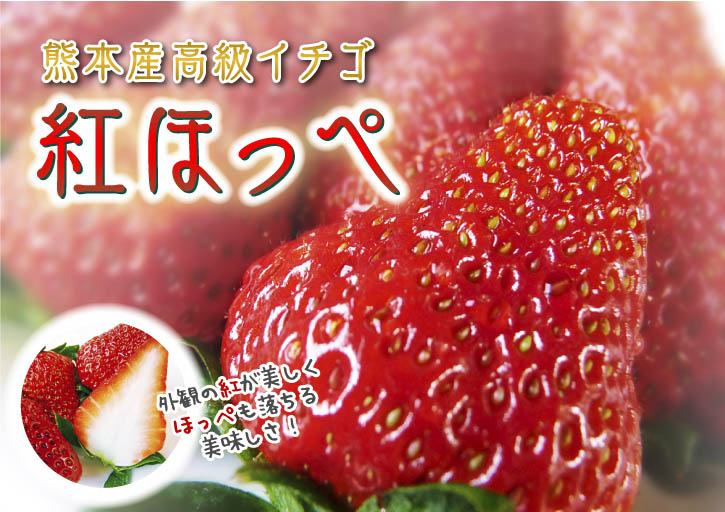 紅ほっぺ 熊本産高級イチゴ『紅ほっぺ』の初出荷は11月26日に決定!!_a0254656_15424291.jpg