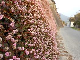 モコモコをまとったコンクリートの壁_e0175370_23294293.jpg