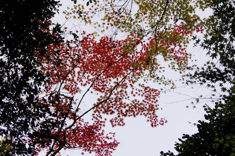 三滝寺の紅葉 again:20131117_f0189086_20342265.jpg