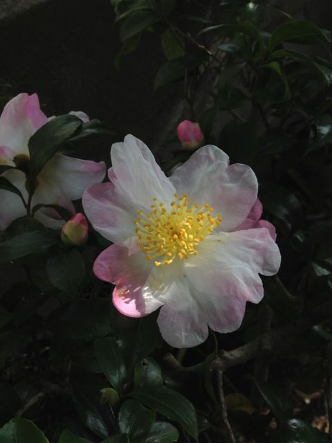 家のお花~冬のお花_e0152493_1251048.jpg