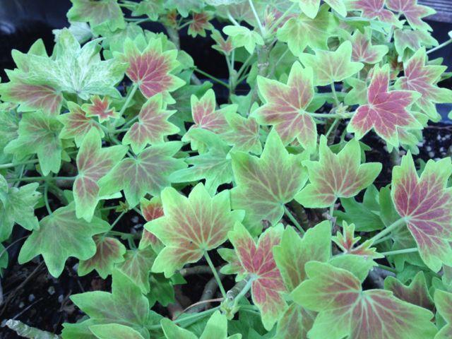 家のお花~冬のお花_e0152493_1251589.jpg