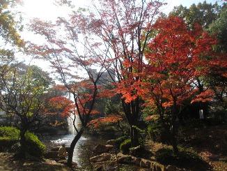 東京もいよいよ、色づいてきました!_d0091909_13221061.jpg