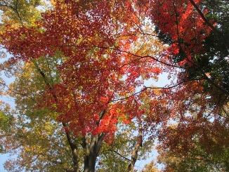 東京もいよいよ、色づいてきました!_d0091909_13232519.jpg