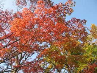 東京もいよいよ、色づいてきました!_d0091909_13234763.jpg