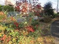 色づいた近隣公園_d0065324_1553851.jpg