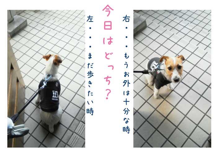 f0313929_11500644.jpg