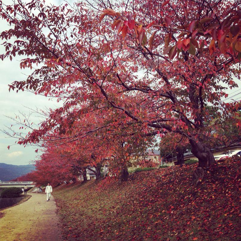 上賀茂神社の紅葉_b0277377_8305517.jpg