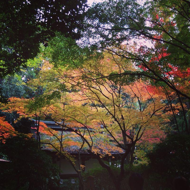 上賀茂神社の紅葉_b0277377_8305614.jpg