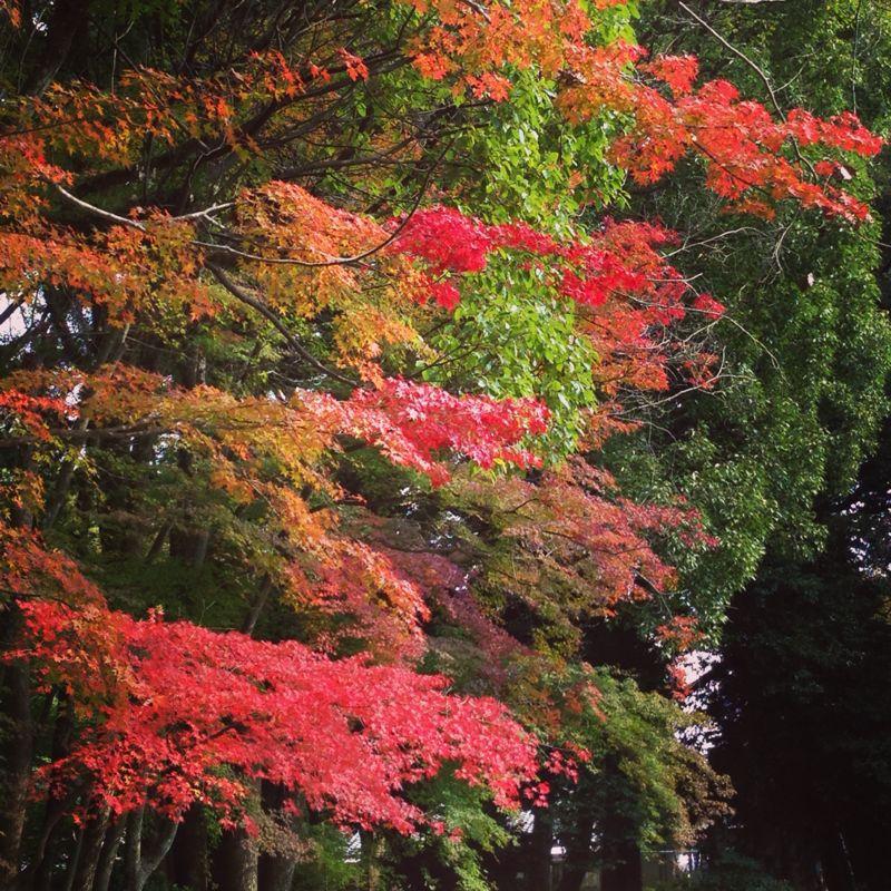 上賀茂神社の紅葉_b0277377_8305731.jpg
