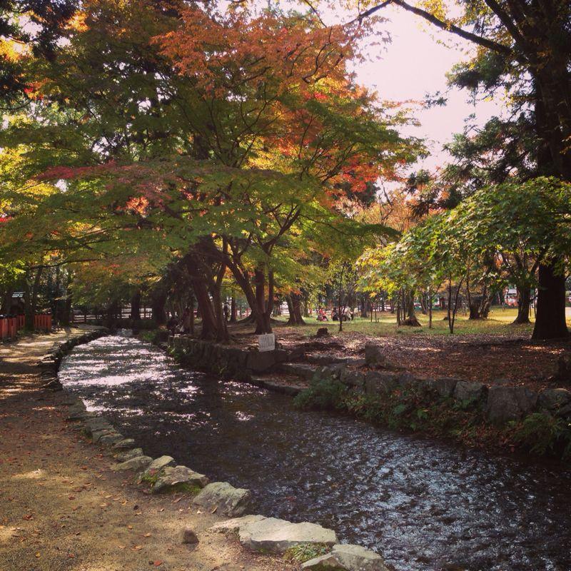 上賀茂神社の紅葉_b0277377_8305848.jpg